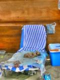 De hond van de slaap Royalty-vrije Stock Afbeeldingen