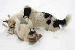 De hond van de sneeuw Royalty-vrije Stock Fotografie