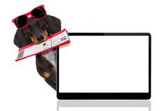 De hond van de tekkelworst op vakantie royalty-vrije stock fotografie