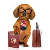 De hond van de tekkelworst op zakenreis stock fotografie