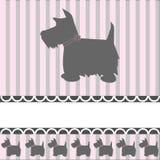 De Hond van de terriër Stock Foto's