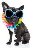 De hond van de vakantiezomer Stock Fotografie