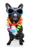 De hond van de vakantiezomer Stock Afbeeldingen