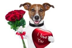 De hond van de valentijnskaart Stock Foto