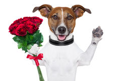 De hond van de valentijnskaart Royalty-vrije Stock Afbeeldingen