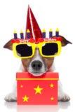 De hond van de verjaardag Stock Fotografie