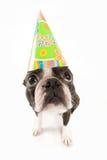 De hond van de verjaardag stock foto
