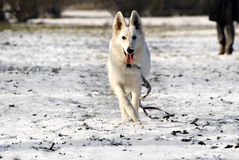 De hond van de vluchteling stock foto