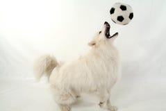 De hond van de voetbal Royalty-vrije Stock Afbeelding