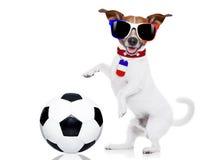 De hond van de voetbalvoetbal met bal stock afbeeldingen