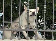 De hond van de wacht Stock Afbeelding