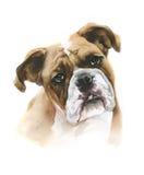 De hond van de waterverfbokser op witte achtergrond Royalty-vrije Stock Afbeelding