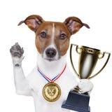 De hond van de winnaar Royalty-vrije Stock Foto's