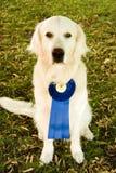 De hond van de winnaar stock afbeelding