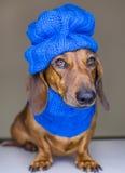De hond van de winter Stock Fotografie