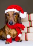 De hond van de winter Stock Afbeeldingen