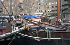 De Hond van de zeeman Royalty-vrije Stock Foto