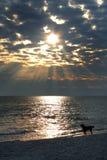 De hond van de zonsondergang Stock Afbeeldingen