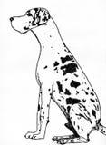 De hond van Denemarken Stock Afbeeldingen