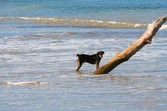 De hond van Fishermans Stock Fotografie