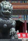 De hond van Fu Stock Foto's