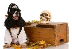 De hond van Halloween stock foto's
