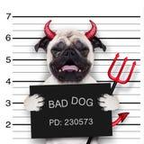 De hond van Halloween mugshot Royalty-vrije Stock Foto