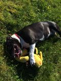 De hond van het babymeisje Royalty-vrije Stock Foto's