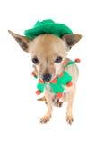 De hond van het elf Stock Foto