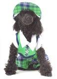 De Hond van het golf royalty-vrije stock foto