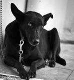 De hond van het huisdier Royalty-vrije Stock Foto