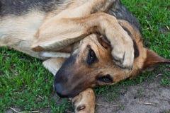 De hond van het huisdier Stock Foto's