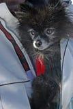 De hond van het jasje stock fotografie