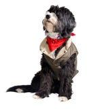 De hond van het land Stock Foto