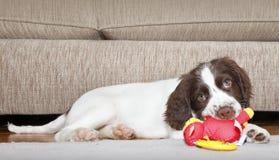 De hond van het puppy het bijten stuk speelgoed Stock Afbeelding