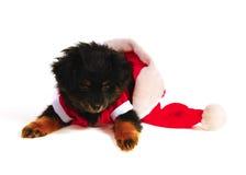 De Hond van het puppy in het kostuum van de Kerstman Stock Foto