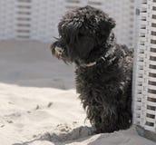De Hond van het strand stock afbeelding