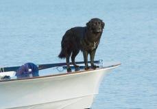 De hond van het water Stock Afbeeldingen