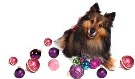 De hond van Kerstmis Royalty-vrije Stock Fotografie