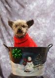 De Hond van Kerstmis Stock Fotografie