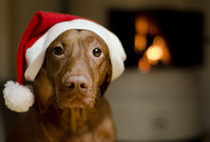 De Hond van Kerstmis Royalty-vrije Stock Afbeeldingen