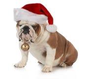 De hond van Kerstmis Stock Afbeeldingen
