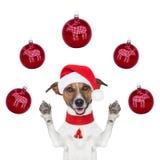 De hond van Kerstmis met santahoed en ballen Stock Afbeelding