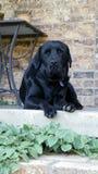 De hond van Leah Royalty-vrije Stock Afbeeldingen