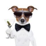 De hond van martini Stock Afbeeldingen