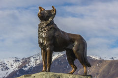 De Hond van McKenzie Royalty-vrije Stock Foto