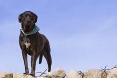 De hond van Nice stock fotografie