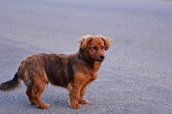 De hond van Nice Royalty-vrije Stock Foto