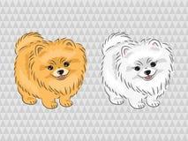 De hond van Pomeranian Vectorillustratie van leuk puppy stock illustratie