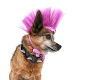 De hond van Punker stock afbeeldingen